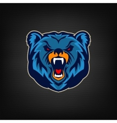 Angry bear head sport team mascot vector