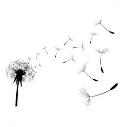 Dandelion black vector