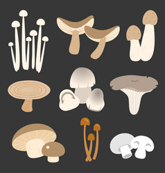 Eatable thai mushroom in flat style vector