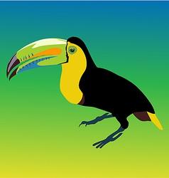 Variegated tucanucu parrot vector image