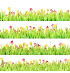 Tulips flowers in green grass isolated EPS 10 vector image