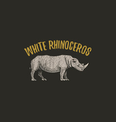 white rhinoceros engraved hand drawn in old sketch vector image vector image