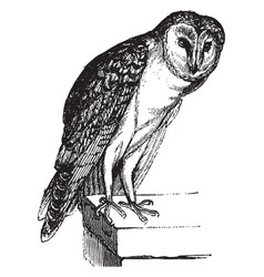 Barn owl vintage vector