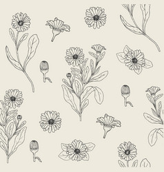 Botanical seamless pattern with blooming calendula vector