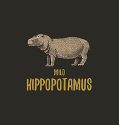 Wild hippopotamus engraved hand drawn in old vector