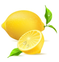 Realistic lemon and half vector