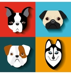 Purebred dogs design vector