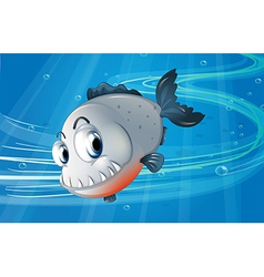 A piranha under the sea vector image