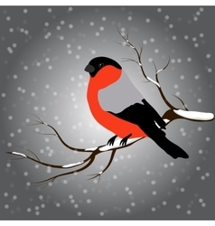 Bullfinch on the fir branch snowfall winter or vector