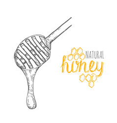 hand drawn honey stick over white background vector image vector image