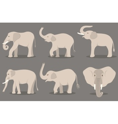 White elephant set vector image vector image