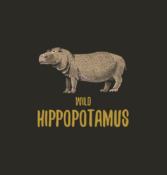 Wild hippopotamus engraved hand drawn in old vector