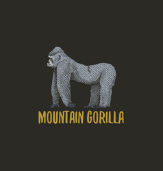 Mountain gorilla engraved hand drawn in old sketch vector