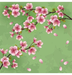 Vintage background with Japanese cherry tree vector image