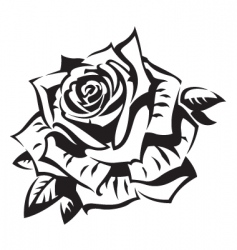 Rose vector