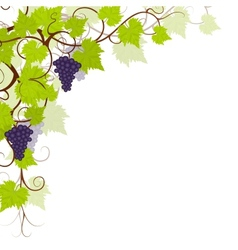 Garden grape vines frame vector