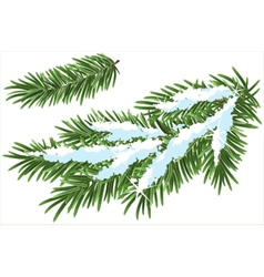 Fur-tree branch under snow vector