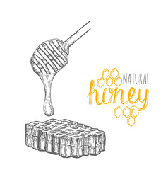 hand drawn honey stick and honey comb over white vector image vector image