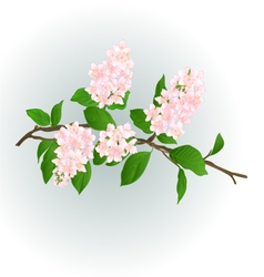 Pink lilac branch natural background vector
