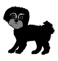 maltese dog vector image