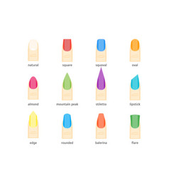 Female nails fashion shape or forms manicure vector