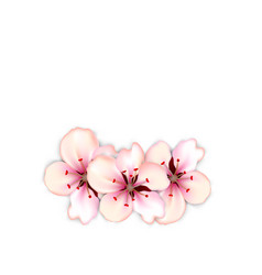 blossoming bouquet sakura red flowers vector image vector image