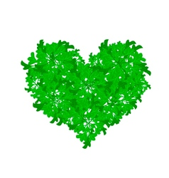 Fresh Parsley Leaves Forming in Beutiful Heart Sha vector image