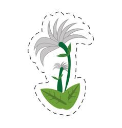 Cartoon chrysanthemum flower image vector