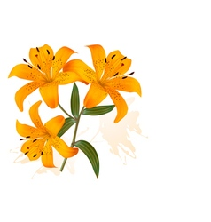 Flower Background With Three Beautiful Lilies vector image