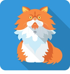 Fluffy persian cat icon flat design vector
