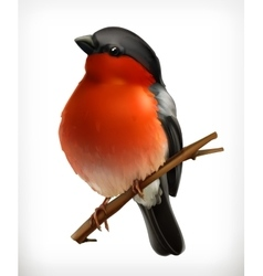 Bullfinch icon vector