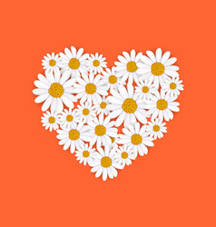Spring heart frame with blooming chamomile vector