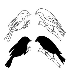the outline and of the silhouette of the birds set vector image vector image