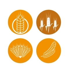 Barley icon design vector