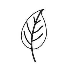 Sketch contour of simple leaf plant vector
