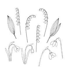 Lilies of the valley and spring flowers vector