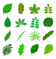 green leafs icons set cartoon style vector image
