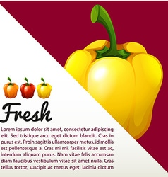 Infographic with fresh capsicum vector