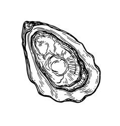 oyster ink sketch vector image vector image