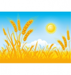 wheat harvest vector image vector image