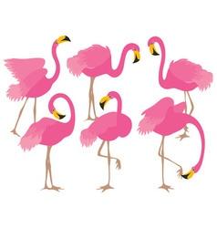 Cartoon Flamingo vector image