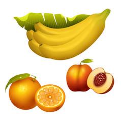 ripe fruits realistic juicy healthy vector image vector image