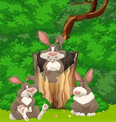 Three rabbits in the woods vector