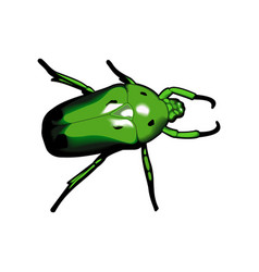 Green beetle vector