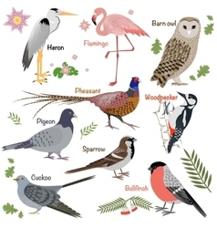 Realistic birds collection vector image