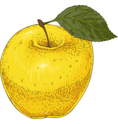 ripe yellow apple vector image vector image