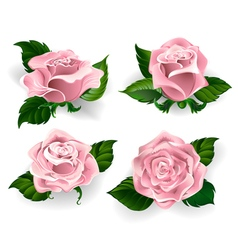 Set of Pink Roses vector image vector image