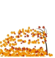 Maple tree in the wind autumn Fallen red and vector image vector image