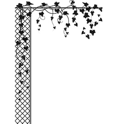 ivy and lattice vector image