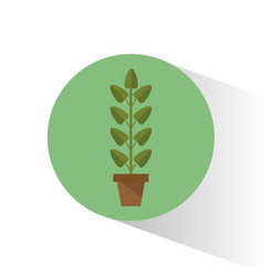 biology plant pot school vector image